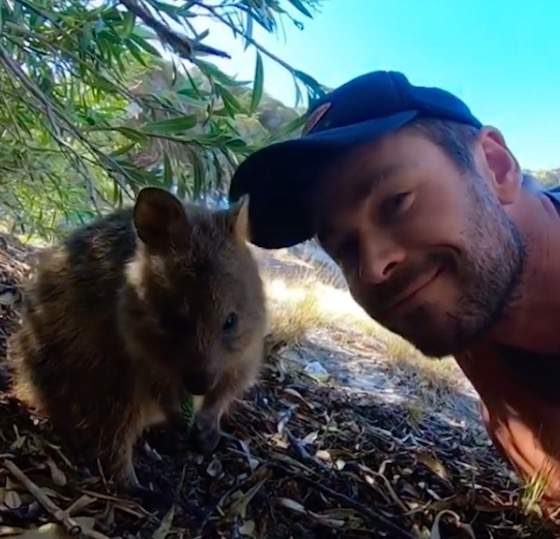 Open Post: Hosted By Chris Hemsworth's New Quokka Friend